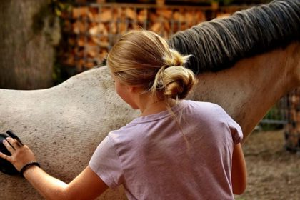 Basic Daily Care of Horses
