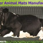 What are the common dairy cattle diseases and their treatments